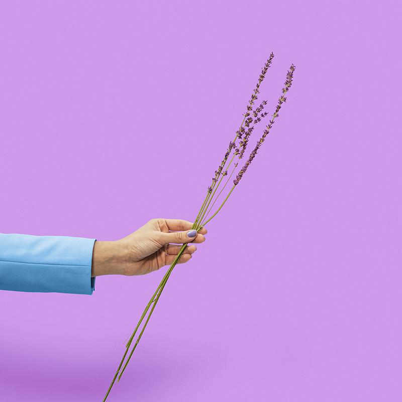 K0042_Lavender2-1-2